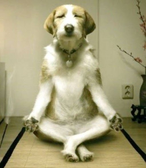 Yoga & humour